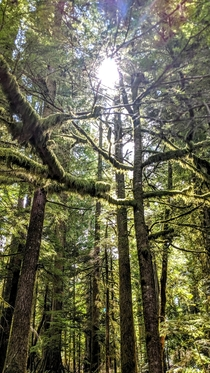 Douglas Fir  Red Cedar - Cathedral Grove MacMillan Provincial Park British Columbia  -