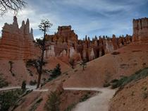 Down amongst the hoodoos in Bryce Canyon UT OC