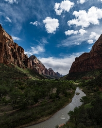 Down in the canyon at Zion Utah