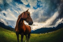 Dramatic horse pose in Paradise New Zealand