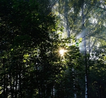 Dramatic light rays at Russian forest