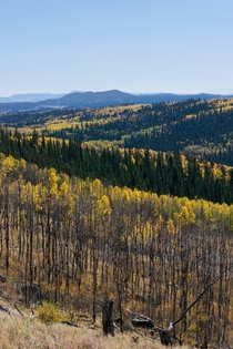 Dreaming of fall colors Kenosha Pass CO