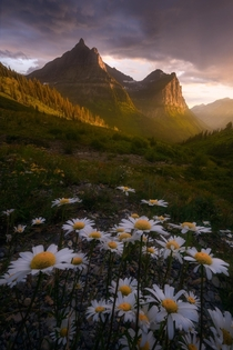 Dreaming of those summer wildflowers in Glacier National Park today Glacier NP MT  mattymeis