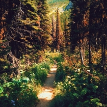 Dreamlike forest - Waterton Canada