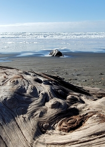 Dreamy driftwood Oregon coast