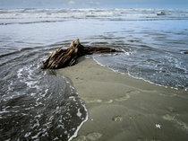Driftwood and Tides - Moclips Washington