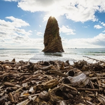 Driftwood Beach on the Oregon Coast Oregon USA  ig-natureprofessor