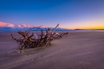Driftwood on Seven Mile Beach at Sunset