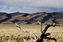 Dunes coming out of the Prairie - Great Sand Dunes National Park Colorado