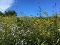 Early fall wildflowers and a beautiful blue sky Hockessin Delaware USA  x