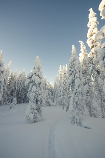 Early morning in the freezing cold of northern Finland Taken some time ago