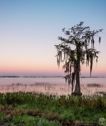Early morning lakeside near Ocala Florida