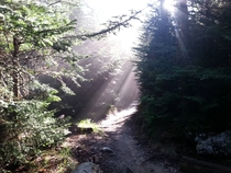 Early morning on the Appalachian Trail