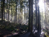 Early Morning Rays - Wallace Falls WA x