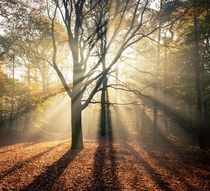 Early morning sun beams in the woodlands The Netherlands