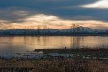 Early morning view of Mount Baker from Pitt Meadows British Columbia