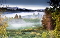 Early Morning Yellowstone Fog
