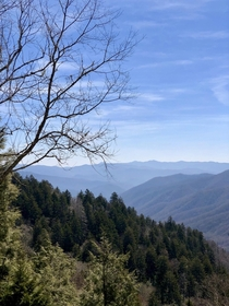 Early spring at Clingmans Dome  x