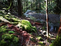 Early Spring in Sooke potholes Vancouver Island Canada OC x