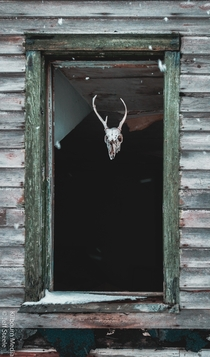 Eccentric owner likes to leave an upstairs light on and hand deer skulls in the windows sometimes
