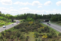 Ecoduct-wildlife crossing in the Netherlands