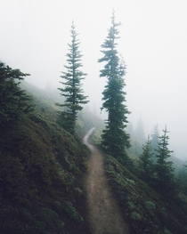 Eerily beautiful early summer trails Olympic National Park WA