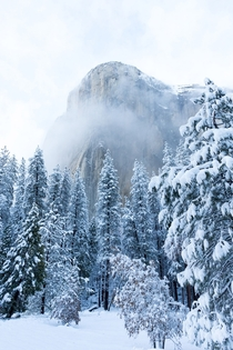El Capitan Appears After Snowstorm - Yosemite CA