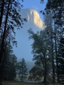 El Capitan breaks through the Yosemite morning fog
