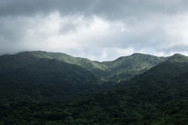 El Yunque National Forest in Puerto Rico