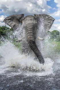 Elephant charges through the water at photographer Ben Cranke