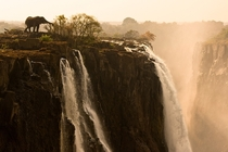 Elephant on the edge of Victoria Falls in Zambia Africa Photo by Marsel Van Oosten