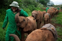 Elephant Orphanage in Nairobi