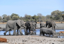 Elephants drink water in one of the channels in the Okavango Delta near the Nxaraga village in the outskirts of Maun Botswana Sept