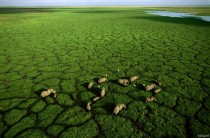 Elephants grazing in Lake Amboseli Kenya