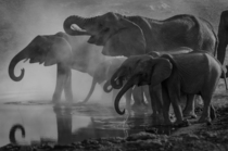 Elephants having an early morning drink at the waterhole Etosha Namibia Photo credit to Richard Jacobs
