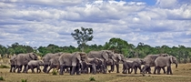 Elephants    Photographed by Alessandro Catta