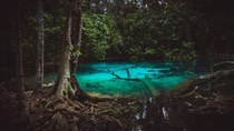 Emerald pool Thailand Krabi