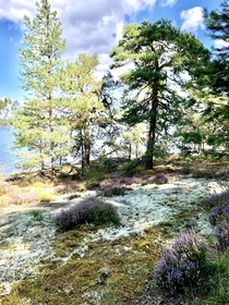 Enchanted by the forests on the Swedish archipelagos