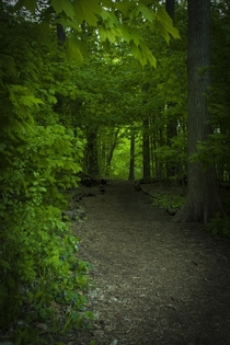 Enchanted Forest at Picnic Point - Madison WI