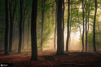 Enchanted forest from the fairytale like forest Speulderbos in the Netherlands