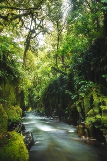 Enchanted Forests New Zealand  joey_argus