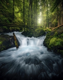 Enchanted forests of the Gifford Pinchot WA