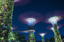 Enchanting Supertrees Grove - Gardens by the bay Singapore
