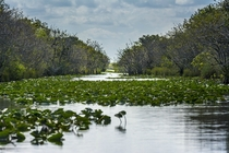Endless Everglades