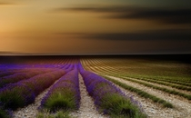 Endless lavender rows in Provence  photo by Tramont_ana