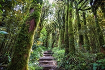 Enter the Goblin Forest Eggmont National Park NZ