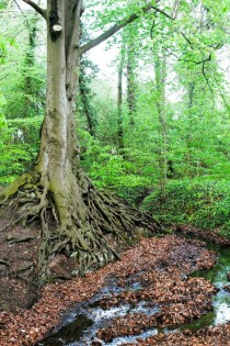 Erosion has exposed the roots of an ancient tree just north of Hamburg Germany