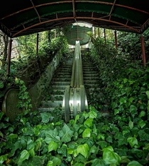 Escalators stopped in time nature takes over it