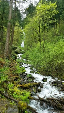 Even in the pouring rain Oregon is so GREEN Near Sweet Creek Falls Oregon