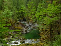Even the water is green - Little North Santiam River OR